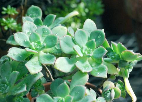 多肉植物で夏のガーデニングレッスン