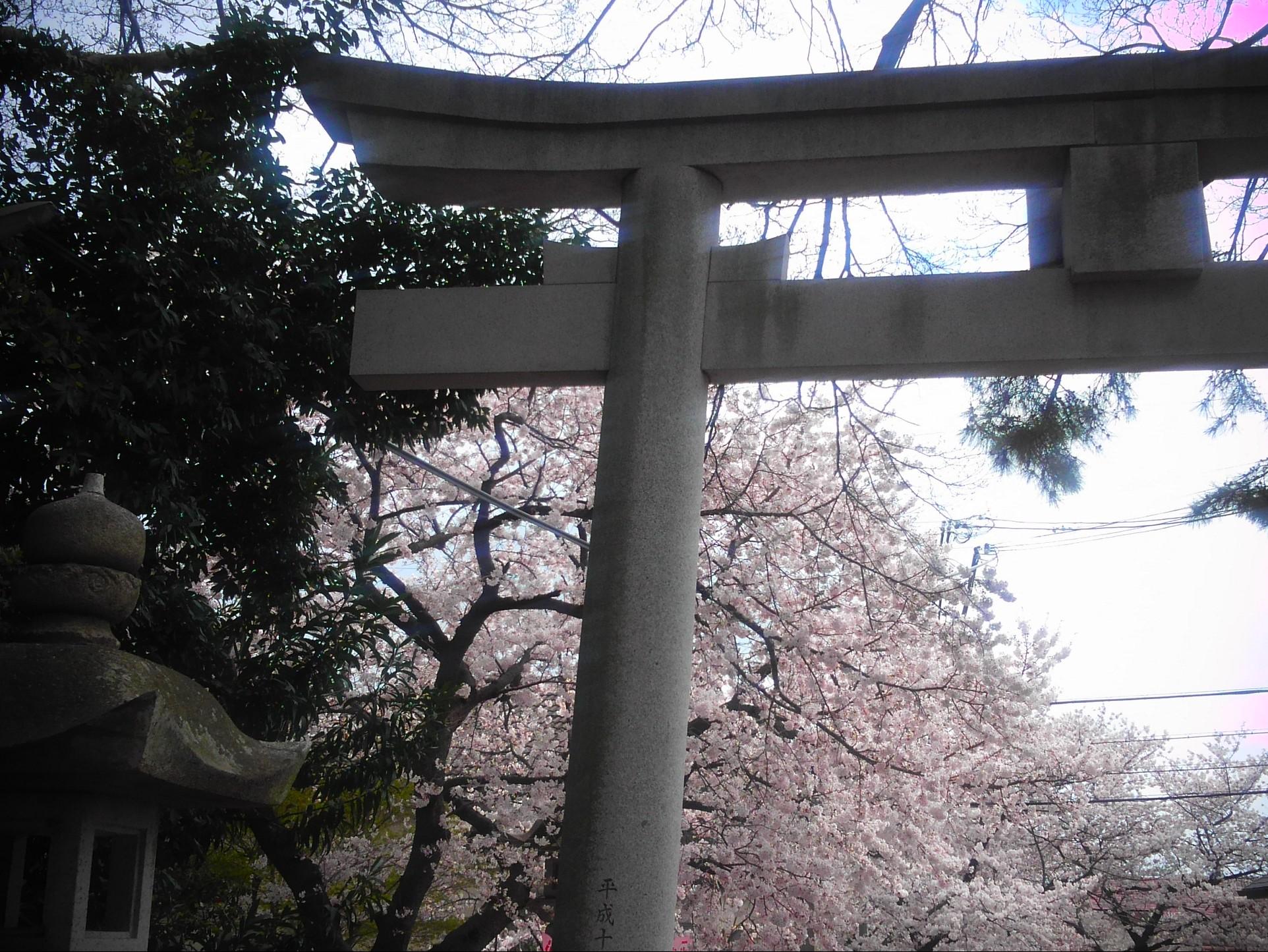 神戸・御影の弓弦羽神社で2017年4月2日「御影花びらまつり」が開催されるよ【※写真付告知】