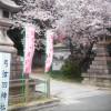 神戸・御影の弓弦羽神社で「花びらまつり」があるよ