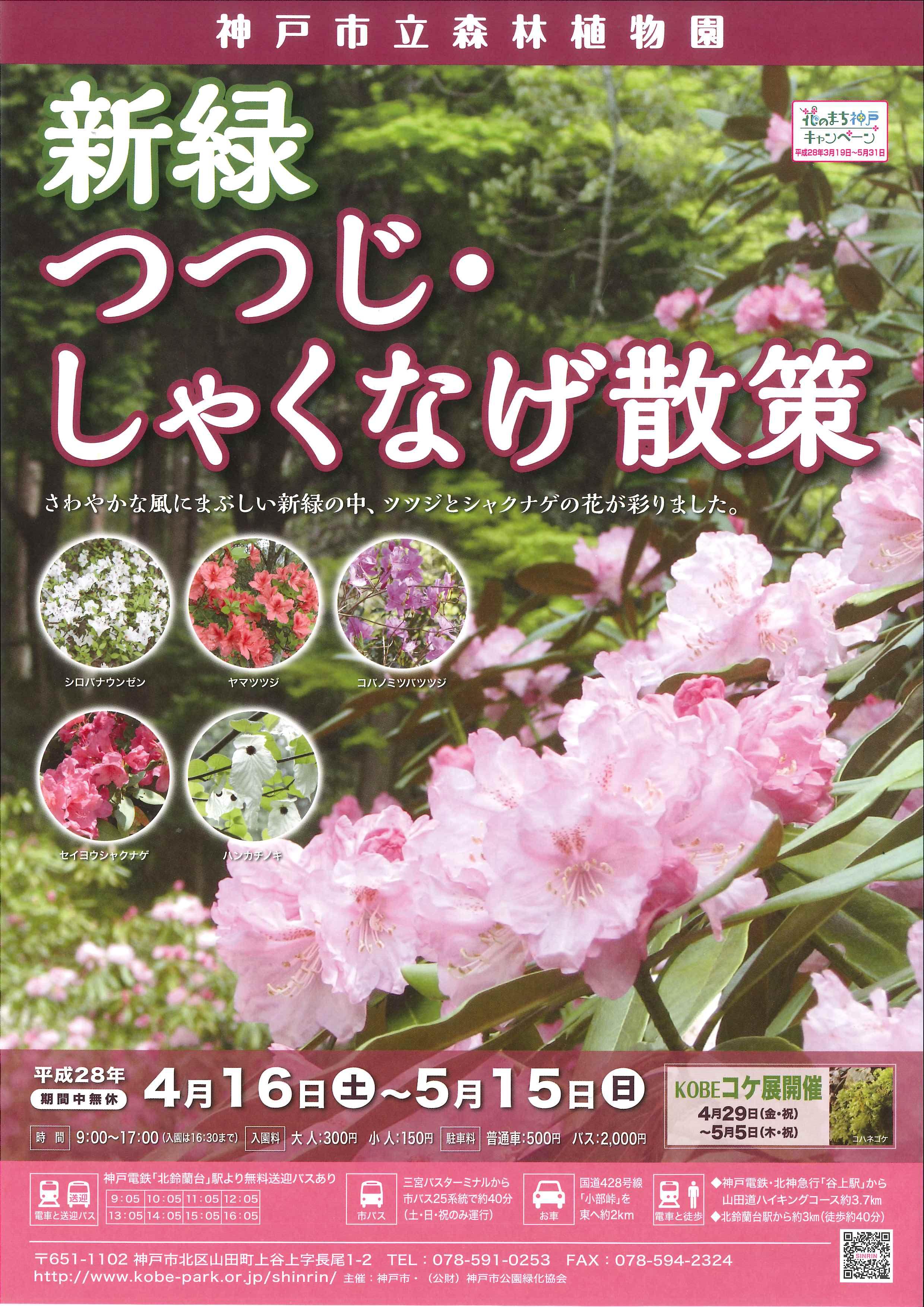 神戸市立森林植物園はつつじ・しゃくなげが満開だよ