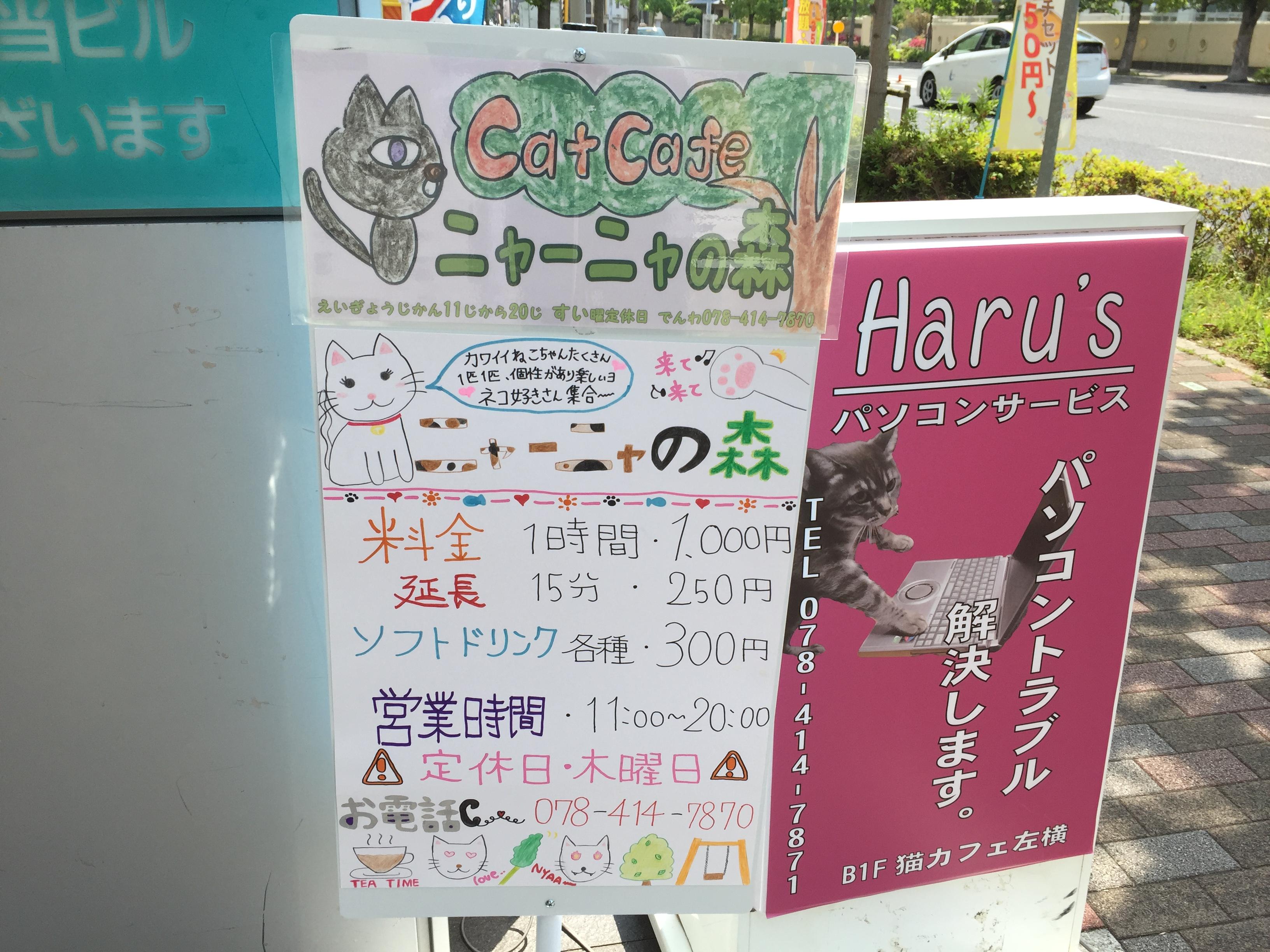 東灘区初の猫カフェ「ニャーニャの森」がオープン!※猫写真とインスタグラムは必見※