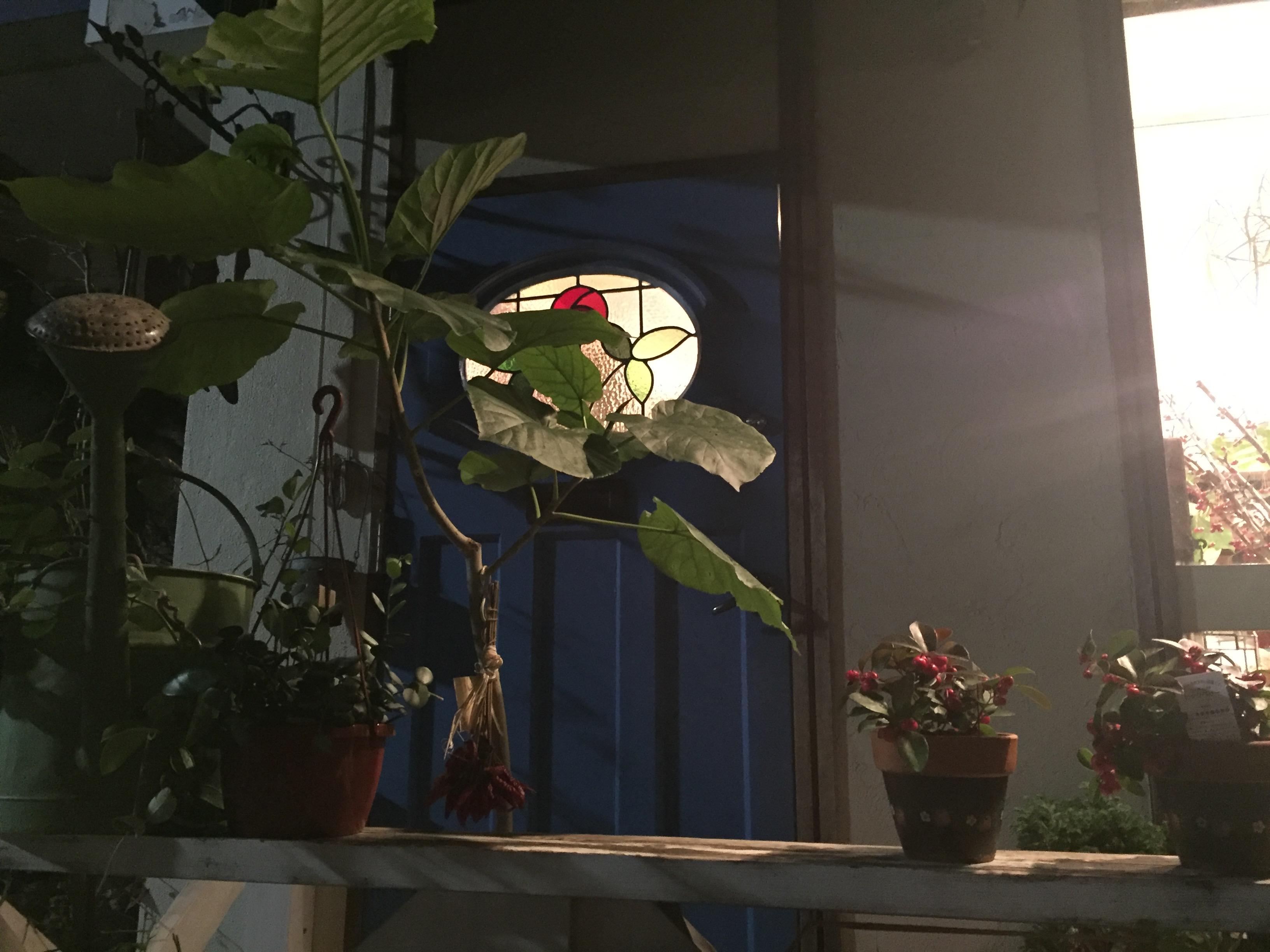 神戸・岡本の「ブルーパルク (Bleu Parc) 」さんのマフィンと焼き菓子を味わってみた【食レポ&ひがしなだスイーツめぐり対象】