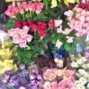 神戸・岡本にFlower Shop「花木ナリ」が新しくOPENしたよ!【※写真付レポ追加更新】