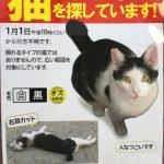 神戸・岡本周辺で迷い猫を探しています【※拡散希望です】