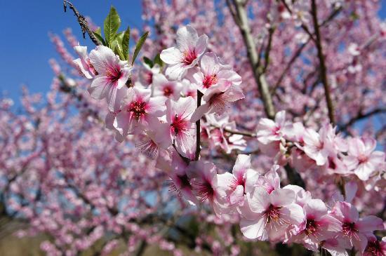 「第15回アーモンド並木と春の音楽会」が3/25に神戸・魚崎の東水環境センターで開催されるよ【※写真付イベント告知】