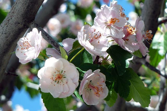「有馬温泉さくらまつり」が2017年4月2日に開催されるよ【※イベント告知】