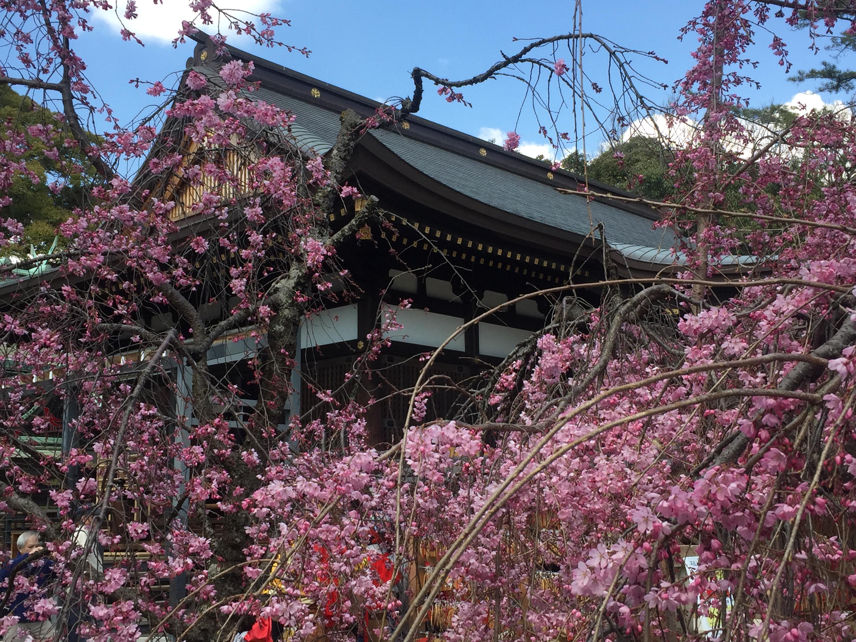 神戸・御影の弓弦羽神社で4月2日「御影花びらまつり」が開催されたよ【※桜写真付レポ】