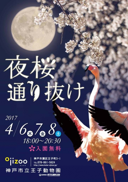 神戸・灘の王子動物園で4/6~4/8「夜桜通り抜け2017」が開催されるよ【※イベント告知】