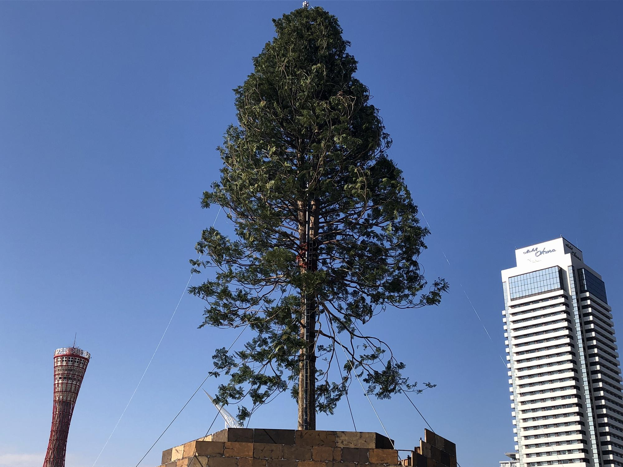 神戸メリケンパークで12/2~12/26「世界一のクリスマスツリー」が輝くイベントが開催されるよ!【※写真あり】 #メリケンパーク #世界一のクリスマスツリー