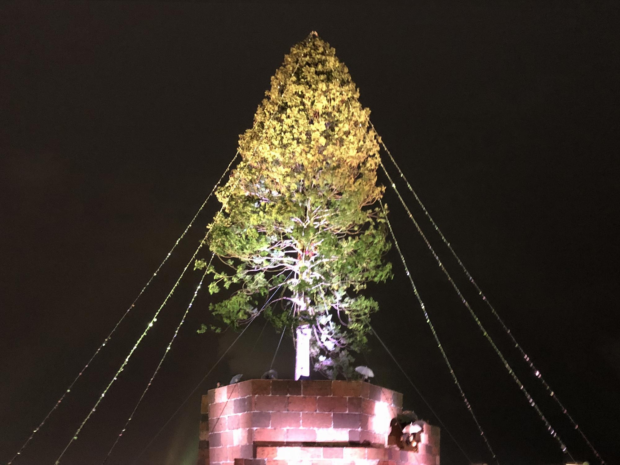神戸メリケンパーク「世界一のクリスマスツリー」の見学と、ほぼ日の糸井重里さん× 西畠清順さんのトークイベントに参加してきた! #世界一のクリスマスツリー #プラントハンター #ほぼ日 #糸井重里