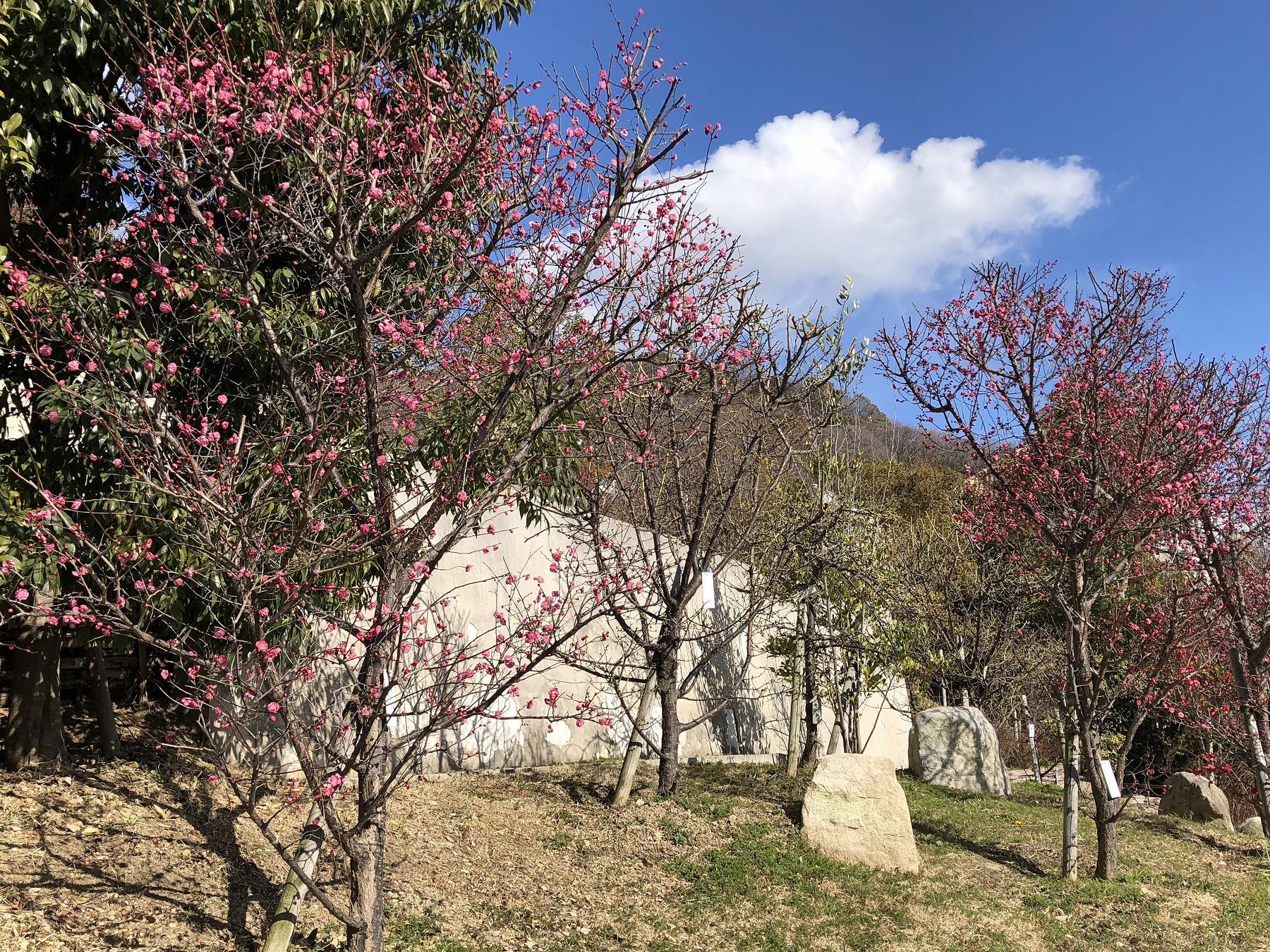 梅林 公園 岡本