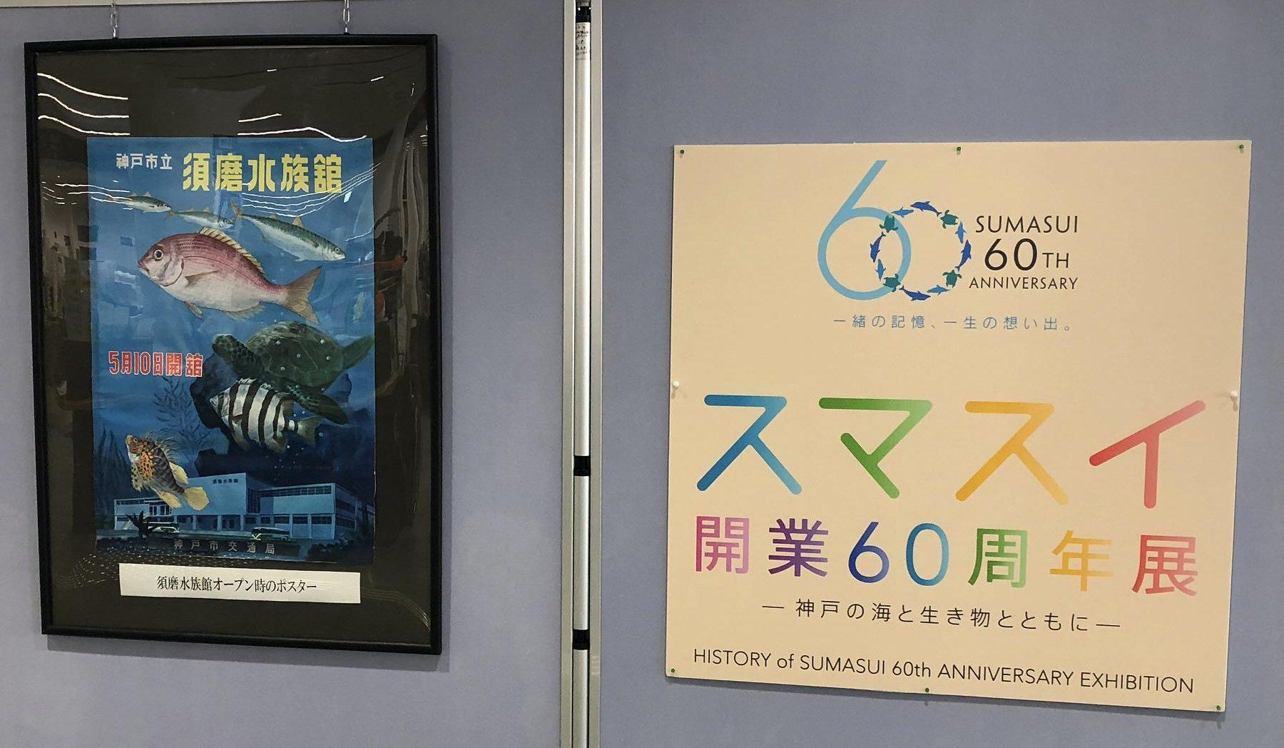 神戸・須磨区役所に「うみがめ」がやってきたので、会いに行ってきた! #須磨区役所 #神戸市立須磨海浜水族園 #スマスイ #うみがめ #須磨区