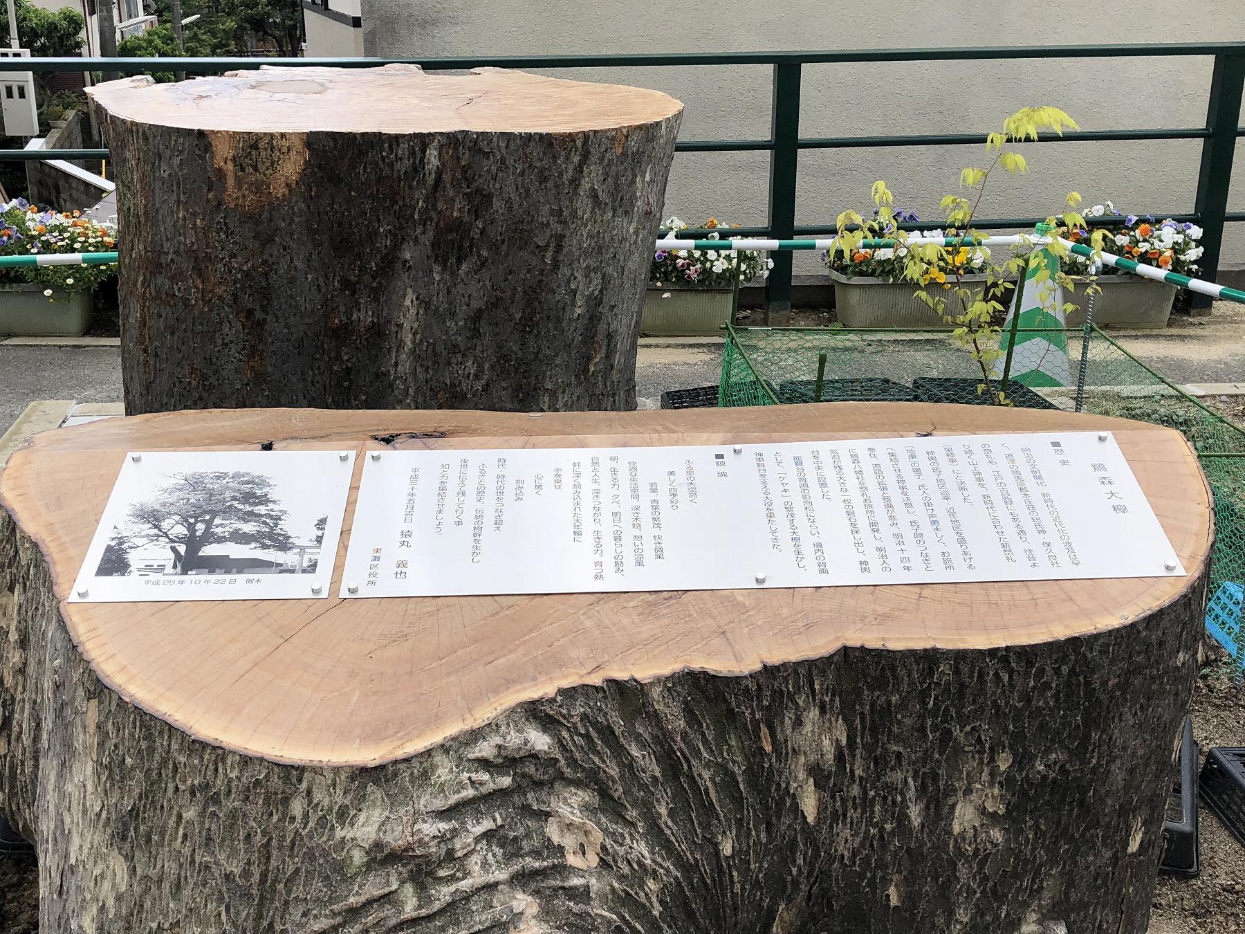 神戸・岡本にある鷺宮八幡神社の「鷺の森のケヤキ」二世の植樹と切り株のモニュメントをご紹介するよ #鷺宮八幡神社 #阪急岡本 #鷺の森のケヤキ