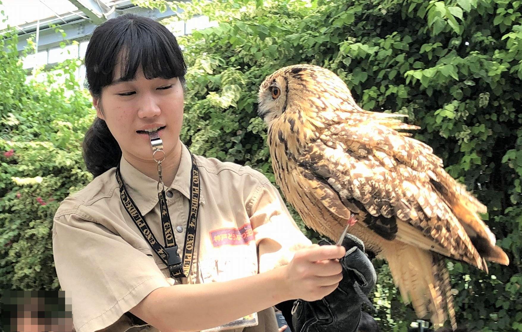 夏休みに「神戸どうぶつ王国(旧神戸花鳥園)」へ行ってきた! #神戸どうぶつ王国 #神戸花鳥園 #ポートアイランド #神戸観光 #動物ふれあい #テーマパーク