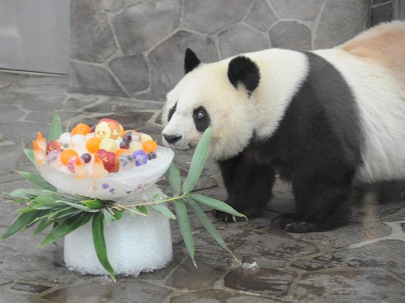 神戸市立王子動物園で9月16日(日)ジャイアントパンダの「タンタンのお誕生日会」が開催されるよ! #タンタンのお誕生日会 #王子動物園 #パンダ #神戸観光 #灘区
