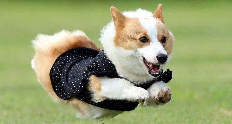 本日11/25開催!神戸最大級のペットの祭典「KOBEわんだふるコレクションVol.7」@アグロガーデン神戸駒ヶ林店 #わんだふるコレクション #飛行犬 #アグロガーデン神戸駒ヶ林店