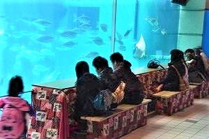 須磨海浜水族園の冬はほっこり「こたつで魚鑑賞」!2月26日まで #神戸市立須磨海浜水族園 #スマスイ #須磨水族館 #須磨区 #こたつ