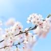 神戸・灘の王子動物園で3月31日(日)~4月2日(火)「夜桜通り抜け2019」の開催! #