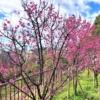 東灘・岡本の「岡本梅林公園」でひとあし先に観梅を楽しんできた♪ #岡本梅林公園 #梅
