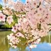 人混みを避けて気分もリフレッシュ♪東灘・阪急御影駅北側すぐの「深田池公園」でお花