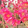 東灘・石屋川公園の梅が満開を迎えたので、お花見散策してみた! #石屋川公園 #東灘区