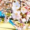 東灘・住吉川公園周辺は桜の綺麗なスポットが満載♪酒蔵の街でお花見を楽しんでみた!